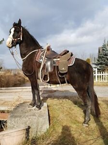 15% OFF CHRISTMAS SALE - TRAIL HORSES - TENNESSEE WALKING HORSES