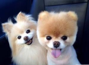 Dog grooming business for sale! Main Beach Gold Coast City Preview