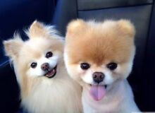 Dog grooming business for sale! Benowa Gold Coast City Preview