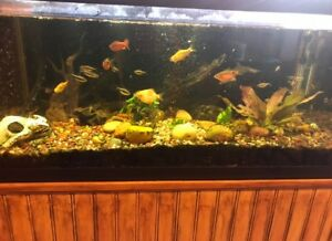 48 gallon fish tank with stand