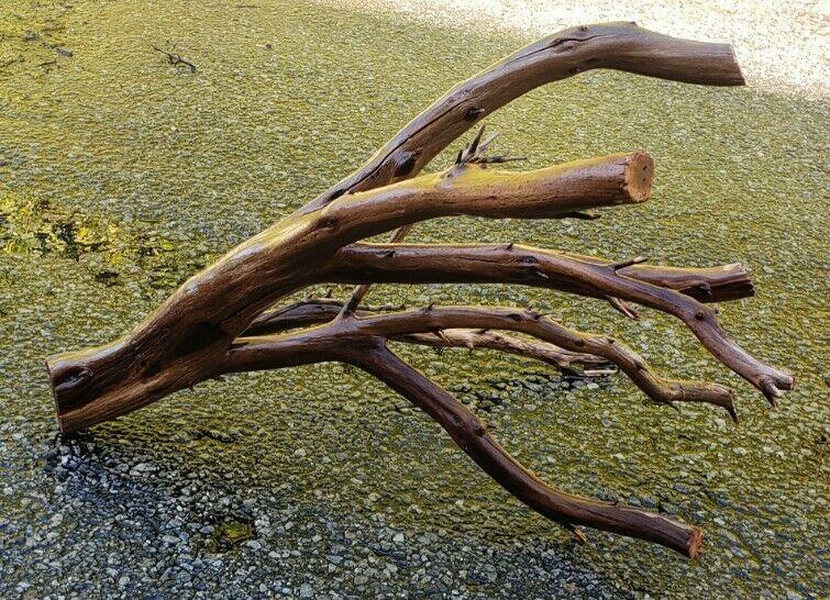 Large Manzanita Driftwood aquarium terrarium aquascape crafts