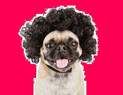 "PetCo Bootique""Disco Wig""S/M Dog Costume Black Curly CAT Halloween Small Medium"