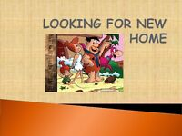 Landored WANTED *I Need a Rental Newtownabbey