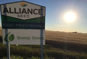 CDC Precision Durum Wheat - Certified Seed For Sale