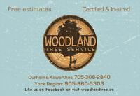 Free Estimates - Tree Services