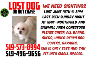 Last seen June 14th on Davenport near the mall