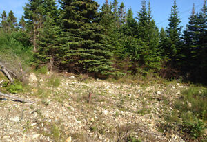 Beautiful 1/2 acre lot in Salmonier St. John's Newfoundland image 2
