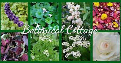 Botanical Cottage