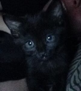 Loving Kittens in Need of Home