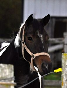 western riding lessons wanted