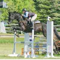 Talented Hunter Jumper For Sale