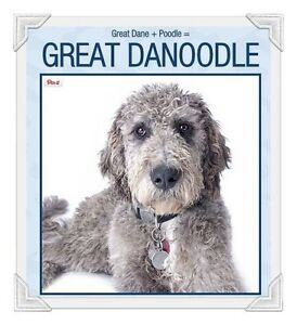 WANTED: Great Danoodle / Great Dane + Poodle mix