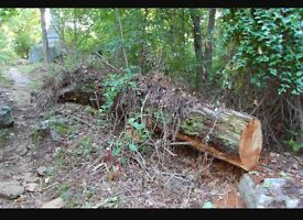 Fallen tree trunks or logs WANTED Co. Durham