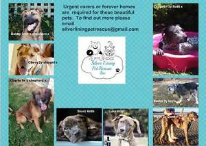 URGENT PETS NEEDING SILVER LINING OR FOSTER HOME Brisbane City Brisbane North West Preview