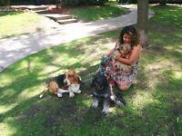 ile des soeurs nuns island cat visit dog walk pension chien chat