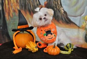 Upcoming Fall Pet Portrait Days