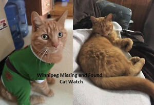 Winnipeg Missing and Found Cat Watch--Helping Reunite your Cat