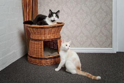 Two Tier Wicker Cat House Basket