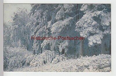 (97079) AK Rauhreif, Farbenfotografie, vor 1945 online kaufen