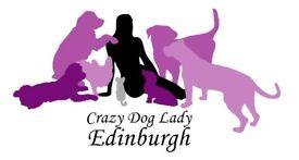 Edinburgh City Centre Dog Sitter and Walker