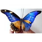 Southamerican-Butterflies