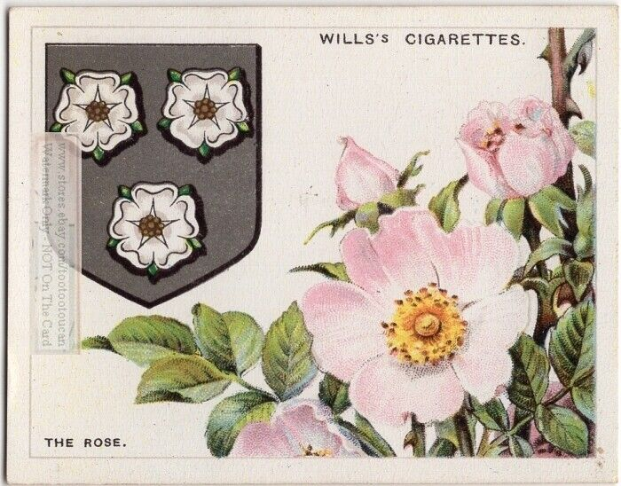 Blooming Rose Flower Symbol Used On Coat Of Arms Or Family Crest 1920s Ad Card
