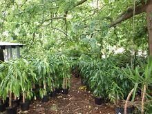 Heaps of Cheap Indoor/Veranda Plants!! (Some outdoor too) Heathmont Maroondah Area Preview