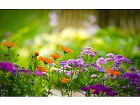Garden Maintenance Hull, Cottingham, Beverley