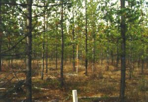 Looking to add value to your woodlot/property