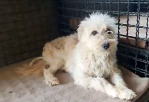 Niagara Dog Rescue  - Jimmy is Looking for a Calm.Home