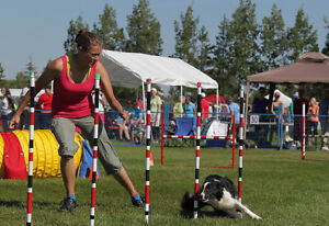 Dynamo Dogsport Classes starting in November!