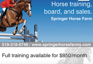 Horse training and lessons
