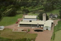 Ongoing Dairy Goat Farm for Sale
