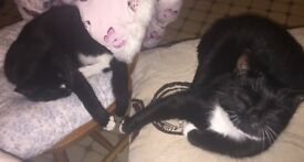 Dolly and Darcy are looking for a loving home