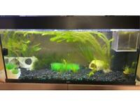 180 litre juwel fish tank