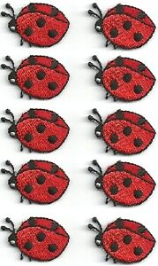 i have 10 ladybugs in house