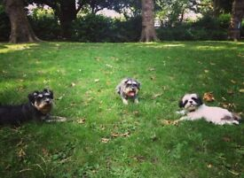 Well established, registered, fully insured, RSPCA approved dog boarding available in Parsons Green