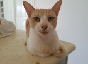 Gnocchi the Cat
