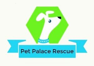 Pet Palace Rescue Has Lots Of Bunnies Available For Adoption!