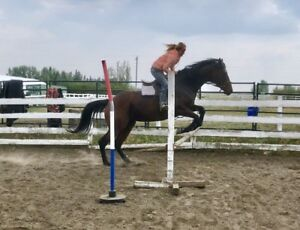 Jumping horse project