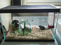 2 Gerbils and all accessories FREE to a good home