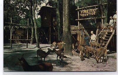 Florida Frontier Tommy Bartlett Deer Ranch Silver Springs Postcard