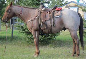ROAN QUARTER HORSES FOR SALE