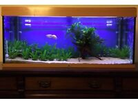 Juwel 240 litre Tropical Freshwater Aquarium with Fish + lots of Extras
