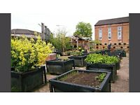 Concrete Garden ( Charity) are seeking freelance session staff in Horticulture, Cookery and Projects