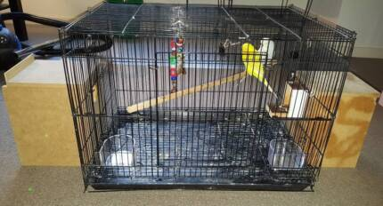 Bargain Cockatiels and Budgies, Cage Available