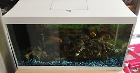 Fish and fish tank for sale