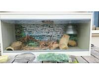 Vivarium - 3ft white & fully set up