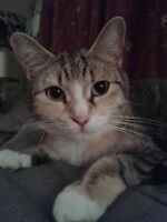 Pension pour petit animaux(chat,chien et exotique)