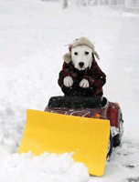 ☃️Residential Snow Removal - Best Rates & Service(204)818-8813☃️